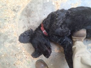 black dog on dusty floor