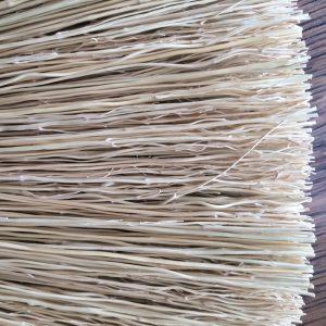 Branching-millet broom
